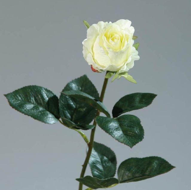 Kolumbianische Rose